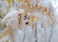És akkor kezdődik a tél: két megyére is a havazás miatt adtak ki figyelmeztetést