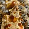 A Notre-Dame méhei is túlélték a tüzet