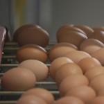 Miért nem éhezünk meg a reggeli tojás után?