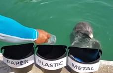 Még ez a delfin is jobban vigyáz a környezetre, mint a legtöbb ember