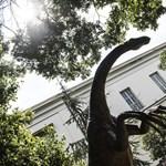 Az év végéig levezényelhetik a Természettudományi Múzeumba Debrecenbe költözését