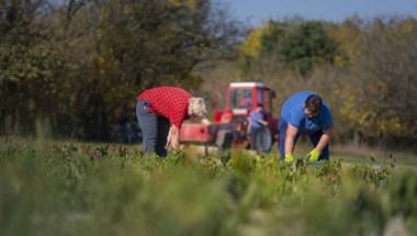 Závecz: Gyengül a Fidesz vidéken, sok körzet pár száz szavazaton múlhat