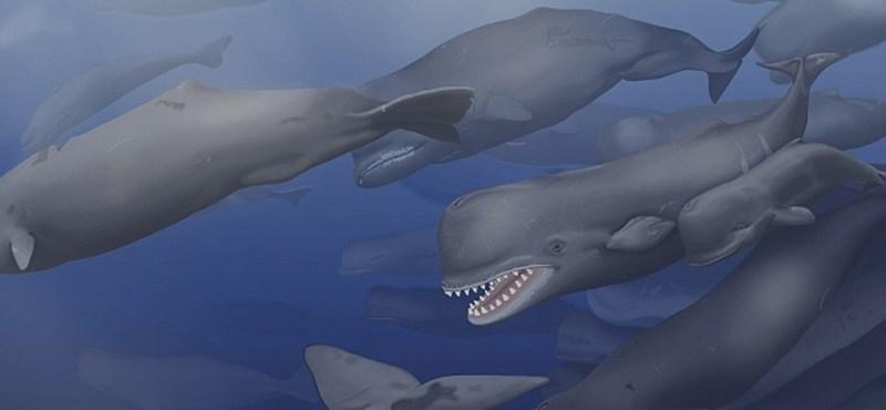 Más fajt találtak az egy évszázada kiásott kövületben, mint eddig hitték