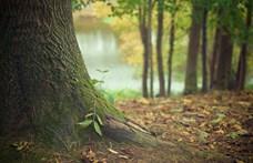 Franciaország méretű erdő nőtt ki a földből az elmúlt 20 évben