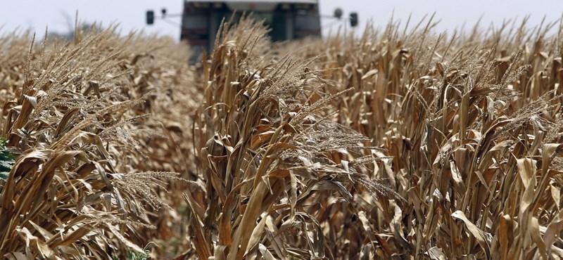 Négy évet kapott adócsalásért egy gabonakereskedő