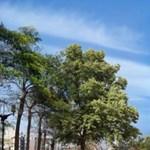 8 milliárd forintba kerül egy lakás a 25 ezer fával beültetett toronyházban
