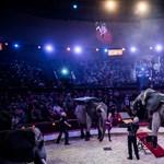 A cirkuszi elefántnak is járnak a nyugdíjas évek