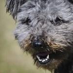 A rendőrség lezárta a deteki kutyakínzók ügyét