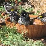 Madarak a kertünkben - tippek, hogy madárdalra keljünk reggelente