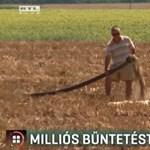 Trágyabűzben fuldoklik Nagymacs, milliós büntetést kaphat a sertéstelep